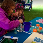Science fun with the Stem Cell Institute